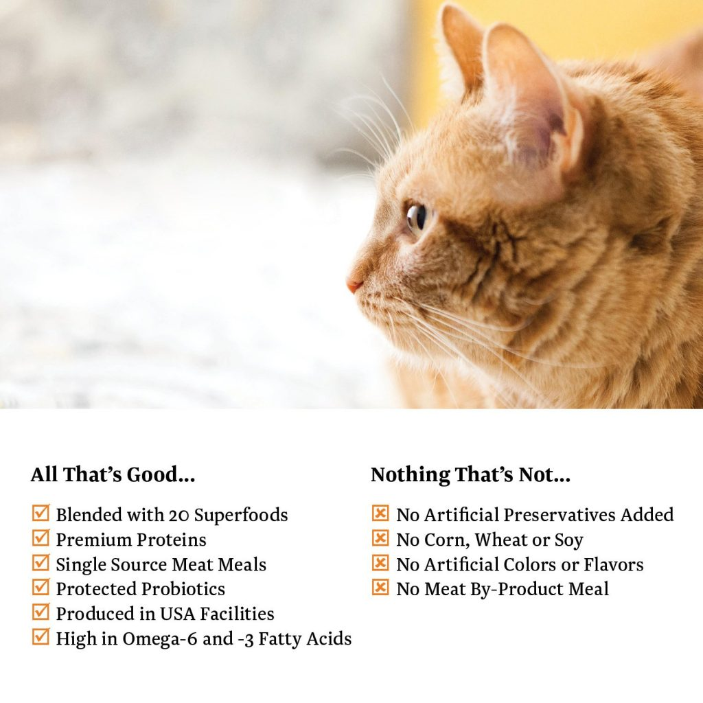 best cat food for senior cats
